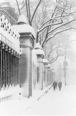 Fifth Avenue Blizzard